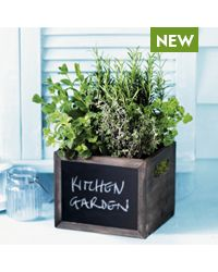 Mini British Herbs Garden - Waitrose