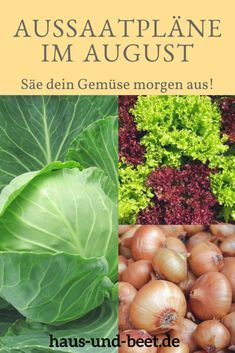 Aussaatpläne im August – Baue Gemüse morgen an Sowing Plans in August: Sow your autumn vegetables tomorrow. Grow your vegetables and harvest winter vegetables from October to January. Vegetable Bed, Vegetable Garden Design, Vegetable Gardening, Winter Vegetables, Organic Vegetables, Garden Types, Garden Care, Growing Plants, Growing Vegetables