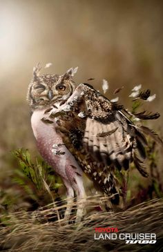 Toyota Land Rover Turbo: Owl   Ads of the World™