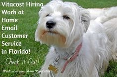 Vitacost Hiring Work at Home Email Customer Service in Florida! Check it Out!