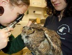 Audubon Society of Portland. Open House info, happens annually.
