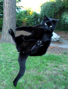 Freefall! Ok....flip....flip!! They said I would always land on my feet!!
