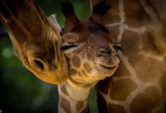 Best Travel Photos of 2013 - Natural Bridge Wildlife Ranch, New Braunfels, Texas, USA