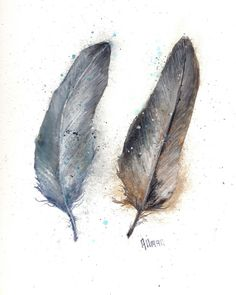 Watercolor feather study by artist Tammy Allman.