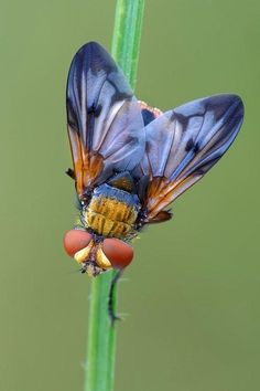 Looks like a fly, buzzes like a fly, bet it's a fly.