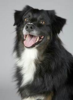 I am a dog freedom advocate.