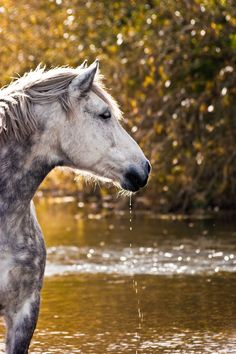 Dapple Grey Horse by angelica Beautiful Horse Pictures, Beautiful Horses, Animals Beautiful, Cute Animals, Dapple Grey Horses, Majestic Horse, Horse World, All The Pretty Horses, Horse Photos