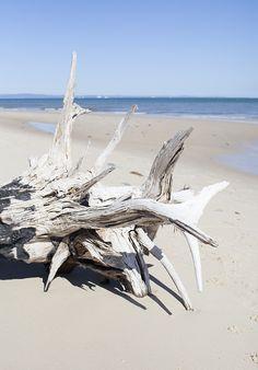 Beach. Photography by Kara Rosenlund