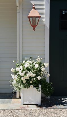 white roses are so pretty...maybe consider white roses and white hydrangea along front fence