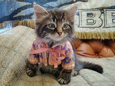 Kisállatok mini pulóverekben | Forrás:  boredpanda.com