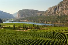 Photo about Rolling hills of vineyards in front of of Vaseux Lake and the McIntyre Bluffs in the Okanagan Valley, British Columbia, Canada. Image of penticton, columbia, crop - 26813602 Wine Tourism, Outdoor Recreation, British Columbia, Cool Pictures, Landscape, World, Wines, Canada