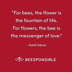 Let's All Beesponsible. Inspirational Quotes For Women, Inspirational Message, Great Quotes, Bee Quotes, Nature Quotes, Bee Cards, Kahlil Gibran, Garden Quotes, Garden Sayings