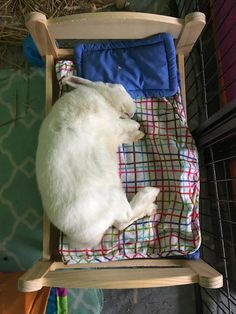Bunny likes his bed