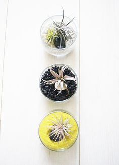 Spring Series // Colorful Air Plant Cocktail