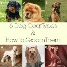 6 Dog Coat Types and How to Groom Them #cowboymagic