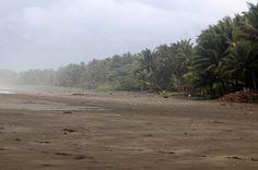 esterillos palms   - Costa Rica