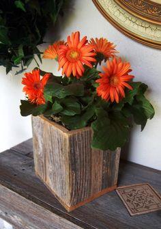 gerber daisys  : )