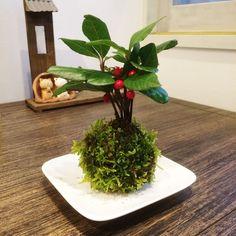 赤い実が可愛い!ヤブコウジの苔玉 皿付 育て方説明付 - 盆栽 -
