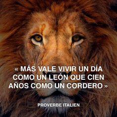 « Más vale vivir un día como un león que cien años como un cordero » Proverbio Italiano #proverbio #italiano #león http://www.pandabuzz.com/es/cita-del-dia/proverbio-italiano-vivir-como-león