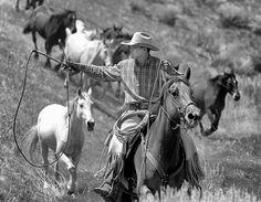 Cowboy Up! by David Cleaver, via 500px