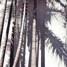 https://www.dollboxx.com.au Inspo .. .. #travel #paradise #palmtrees #mermaid #inspo #wanderlust #summer #goodvibes #bikinilife #bikiniseason #thailand #islandlife #surf #waves #love