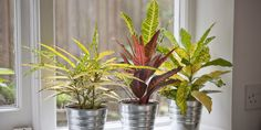 Looking to spruce up a room? There's nothing like a cheery houseplant.  Check out these suggestions from @HouseBeautiful #HomeStyle #weloveplants