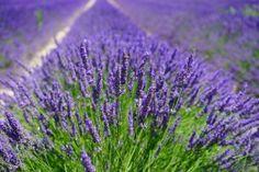Homeopatický prípad Marrubium vulgare  http://www.akademiahomeopatie.sk/vzdy-vsetko-naraz-marrubium-vulgare/