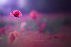 My Love by yayoi
