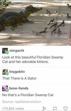 Florida Swamp Cat & Babies
