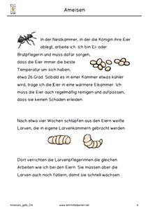 Ameisen Ampelheft Gelb