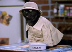 Yes this is a cat. That's not the point. I have fallen in love with the cat's voice. Just the voice, nothing else although the puppet is cute. I can't find the name of the actor or a picture of the actor therefore you will be satisfied with the picture of Salem or I will hit you with a butter sock.