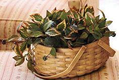 NR - Fruiting Ivy-23874 basket from longaberger.com