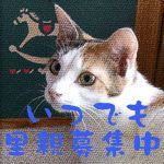 Adopting cats and dogs in Japan / いつでも里親募集中