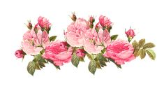 vintage roses clip art   Description Free Vintage Rose Borders Roses Scrapbooking Embellishment ...