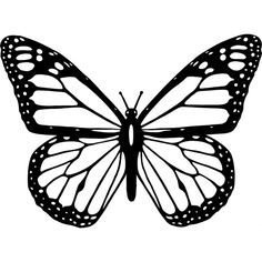 Black And White Butterfly ❤ liked on Polyvore featuring filler