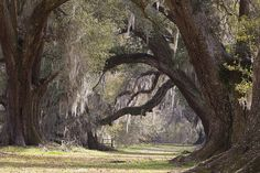 Oak Alley at the Academy of the Sacred Heart, Grand Coteau, Louisiana