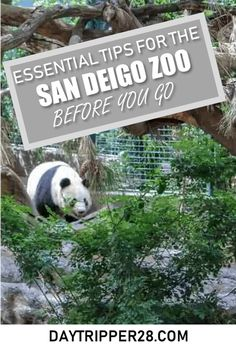 The San Diego Zoo has a reputation for being the best in the country. I'm giving out my best San Diego Zoo tips and tricks. San Diego Vacation, San Diego Travel, California Vacation, California Dreamin', Coronado San Diego, Voyage Usa, Vacations To Go, Family Vacations, Family Travel