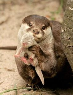 Behold the chosen one…Prince Sea Otter! This has got to be the most adorable thing in the universe.