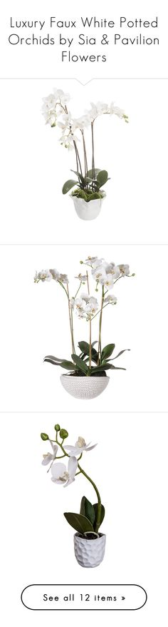 """Luxury Faux White Potted Orchids by Sia & Pavilion Flowers"" by pavilion-broadway ❤ liked on Polyvore"