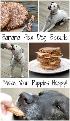 Easy to make healthy dog cookies made with banana, flax, whole wheat and coconut oil. My kids love making these diy dog treats with me! Vegan Dog Food, Food Dog, Puppy Obedience Training, Training Your Dog, Dog Treat Recipes, Dog Food Recipes, Vegetarian Recipes, Dog Cookies, Puppy Treats