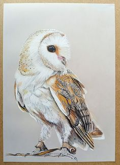 Original pencil drawing on A4 drafting film with gold mountboard backing. Multimedia Arts, Gouache, Pencil Drawings, Owl, Birds, Watercolor, The Originals, Animals, Patterns