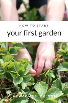 Fine out how to start your first garden build a raised bed plant and make garden markers. Fine out how to start your first garden build a raised bed plant and make garden markers. Garden Pests, Garden Tools, Box Garden, Garden Ideas, Gardening For Beginners, Gardening Tips, Raised Garden Beds, Raised Bed, Australian Garden