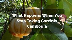 What Happens When You Stop Taking Garcinia Cambogia?