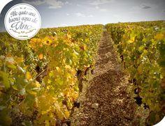 ¿Qué tal un viaje de enoturismo? En diferentes partes del mundo podemos disfrutar una salida a algún viñedo disfrutando una buena copa de vino!