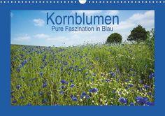 Kornblumen - Pure Faszination in Blau - CALVENDO