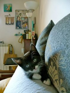 #cat photography on sofa