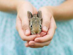 A Roma e Milano si festeggiano i conigli e i nuovi animali da compagnia