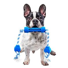 For preventing a Frenchie from feeling stressed every time his/her owner walks out the door, separation anxiety toys might present one of the solutions. They are great tools for keeping a dog distracted from the owner's absence. Dog Cleaning, Teeth Cleaning, Dog Chew Toys, Cat Toys, French Bulldog Clothes, Cheap Pets, Dog Sounds, Bulldog Breeds, Pugs