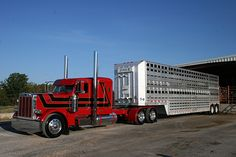 Cattle Hauling | Livestock Haulers Become Modern-Day Trail Bosses | Pearl Snaps