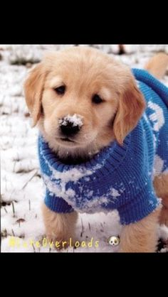 Pup in a sweater